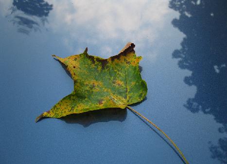 Name:  leaf.png Views: 951 Size:  384.4 KB
