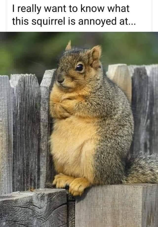 Name:  squirrel.jpg Views: 443 Size:  70.7 KB