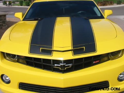 Bumble Bee New Stripes 1 (2).JPG