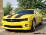 Bumble Bee New Stripes 1.JPG